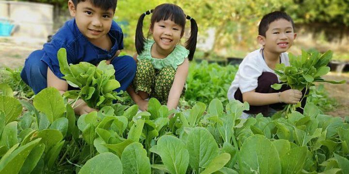 โครงการเด็กกินผัก