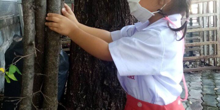 กิจกรรมเรียนรู้เกี่ยวกับไม้ยืนหยัดใหญ่